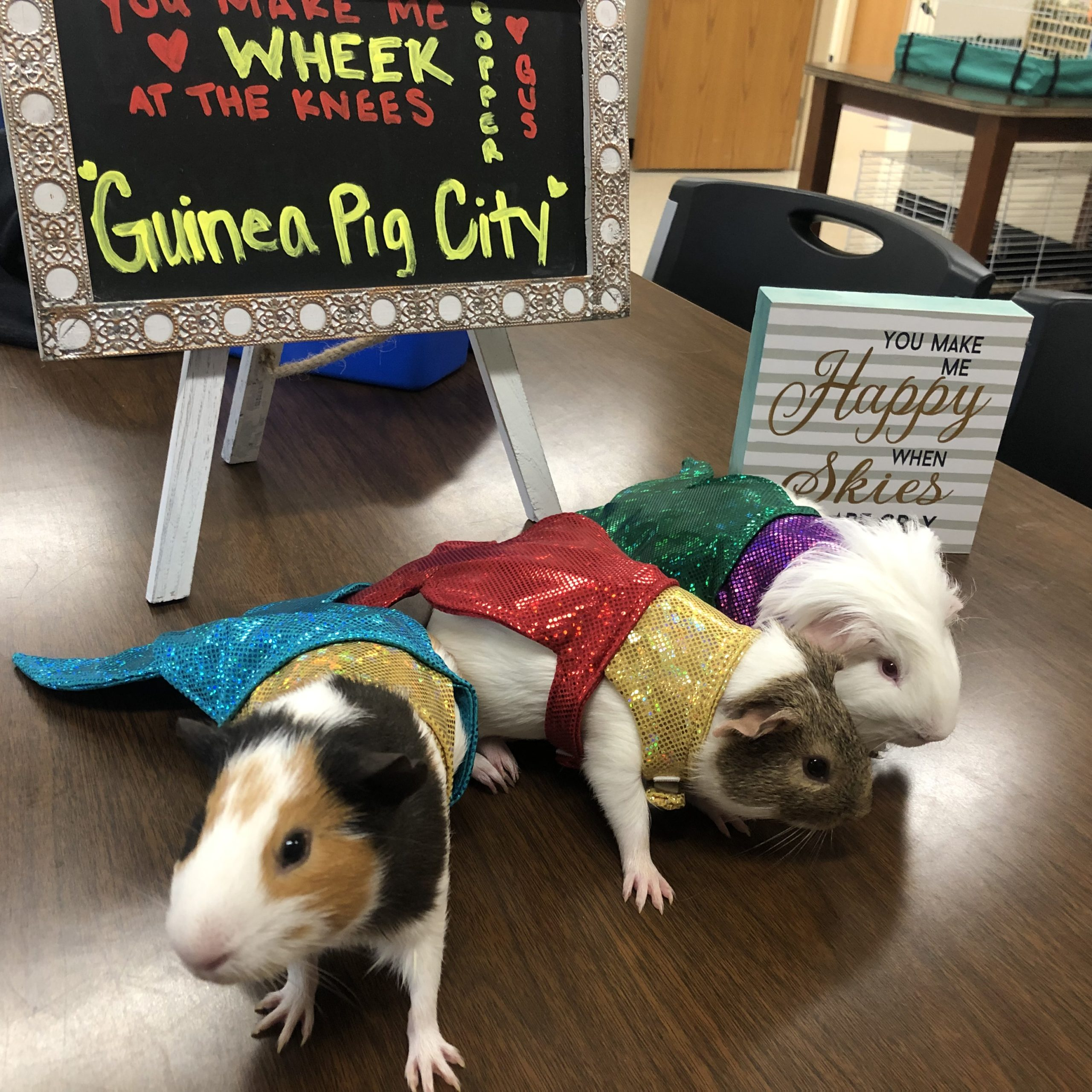 Pets In The Classroom Why Not Education Grants
